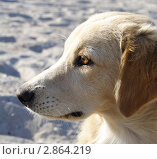Голова собаки. Стоковое фото, фотограф Дмитрий Неумоин / Фотобанк Лори