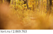 Купить «Осенний парк», видеоролик № 2869763, снято 9 октября 2011 г. (c) Александр Коваленко / Фотобанк Лори