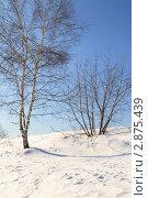 Зимний пейзаж. Стоковое фото, фотограф Дмитрий Неумоин / Фотобанк Лори