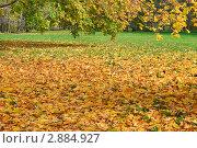 Купить «Опавшая листва», эксклюзивное фото № 2884927, снято 16 октября 2011 г. (c) Алёшина Оксана / Фотобанк Лори