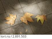 Листья. Стоковое фото, фотограф Ульяна Смирнова / Фотобанк Лори