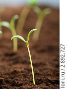 Купить «Молодые зеленые ростки в грунте», фото № 2892727, снято 11 декабря 2010 г. (c) Elnur / Фотобанк Лори