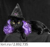 Купить «Черная кошка в шляпе ведьмы на темном фоне», фото № 2892735, снято 18 октября 2011 г. (c) Ирина Кожемякина / Фотобанк Лори