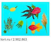 Купить «Композиция из засушенных листьев», фото № 2902863, снято 21 мая 2019 г. (c) Юрий Плющев / Фотобанк Лори