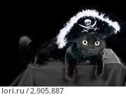 Купить «Черная кошка в шляпе пирата  на темном фоне», фото № 2905887, снято 18 октября 2011 г. (c) Ирина Кожемякина / Фотобанк Лори