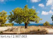 Купить «Красивое зеленое дерево», фото № 2907003, снято 8 августа 2011 г. (c) Виталий Романович / Фотобанк Лори
