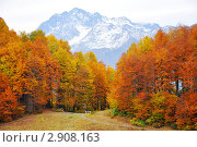 Осенний лес с видом на гору Чугуш, Кавказ, Красная Поляна. Стоковое фото, фотограф Анна Мартынова / Фотобанк Лори
