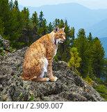 Купить «Рысь», фото № 2909007, снято 14 июля 2011 г. (c) Яков Филимонов / Фотобанк Лори