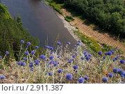 Цветы на вершинке горы Акбика. Стоковое фото, фотограф хлебников алексей / Фотобанк Лори