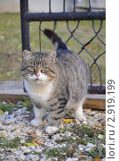 Кот во дворе дома. Стоковое фото, фотограф Екатерина Болсунова / Фотобанк Лори