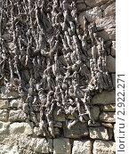 Стебли плюща на каменной крепостной стене в Жироне. Стоковое фото, фотограф Владимир Лобановский / Фотобанк Лори