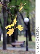 Осень. Стоковое фото, фотограф Андрей Марцинкевич / Фотобанк Лори