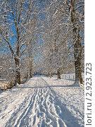 Купить «Зимняя аллея», фото № 2923723, снято 19 декабря 2010 г. (c) Татьяна Кахилл / Фотобанк Лори