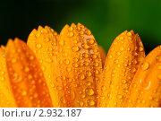 Купить «Цветочные лепестки с каплями росы», фото № 2932187, снято 17 сентября 2011 г. (c) Евгений Дробжев / Фотобанк Лори