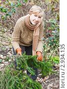 Купить «Женщина с лапками ели для укрывания цветов на зиму», эксклюзивное фото № 2934135, снято 6 ноября 2011 г. (c) Майя Крученкова / Фотобанк Лори