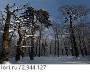 Зимняя сказка. Стоковое фото, фотограф Александр Степанов / Фотобанк Лори
