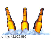 Купить «Запотевшие три  пивные бутылки во льду», фото № 2953895, снято 15 ноября 2011 г. (c) Анатолий Типляшин / Фотобанк Лори