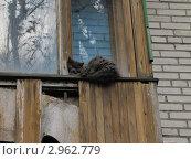Пушистый кот лежит на балконе. Стоковое фото, фотограф Сергей Павлов / Фотобанк Лори