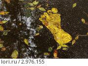 Купить «Осень наступила», фото № 2976155, снято 18 сентября 2010 г. (c) Дмитрий Осипов / Фотобанк Лори