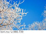 Иней. Стоковое фото, фотограф Михаил Хохолков / Фотобанк Лори