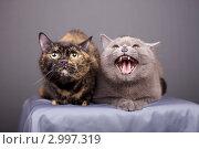Купить «Кошки», эксклюзивное фото № 2997319, снято 15 ноября 2018 г. (c) Яна Королёва / Фотобанк Лори