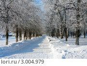 Зимний пейзаж, городской парк. Стоковое фото, фотограф ElenArt / Фотобанк Лори