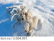 Купить «Зима, замерзшие растения», фото № 3004991, снято 20 декабря 2009 г. (c) ElenArt / Фотобанк Лори