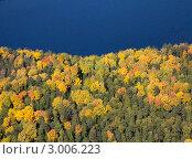 Вид сверху на осенний лес на берегу озера. Стоковое фото, фотограф Владимир Мельников / Фотобанк Лори