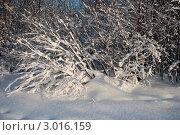После снегопада. Стоковое фото, фотограф Терещенко Марина / Фотобанк Лори