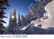 Купить «Зимний пейзаж с заснеженными деревьями», фото № 3030543, снято 27 ноября 2011 г. (c) Евгений Прокофьев / Фотобанк Лори