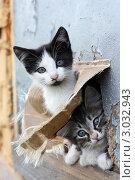 Купить «Два бездомных котенка», фото № 3032943, снято 4 августа 2011 г. (c) Инга Макеева / Фотобанк Лори
