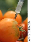Купить «Генетически модифицированные помидоры. Инъекция в помидор», фото № 3037987, снято 23 августа 2009 г. (c) kiyanochka / Фотобанк Лори