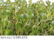 Зеленый куст. Стоковое фото, фотограф Оксана Sk / Фотобанк Лори