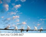 Купить «Белые голуби на фоне синего неба», фото № 3049667, снято 20 апреля 2008 г. (c) Владимир Мельников / Фотобанк Лори