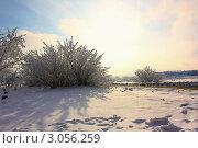 Зимний цвет заката. Стоковое фото, фотограф Игорь Белов / Фотобанк Лори