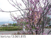 Владикавказ (2011 год). Стоковое фото, фотограф Alehina Tanya / Фотобанк Лори