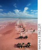 Соленое озеро в Крыму (2009 год). Стоковое фото, фотограф Кирилл Греков / Фотобанк Лори
