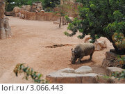 Носороги в биопарке Валенсии. Стоковое фото, фотограф Татьяна Королева / Фотобанк Лори