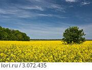 Рапсовое поле. Стоковое фото, фотограф Виктор Зандер / Фотобанк Лори
