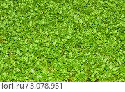 Зеленая трава. Стоковое фото, фотограф Евгений Липский / Фотобанк Лори