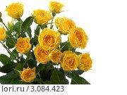 Букет жёлтых роз на белом фоне. Стоковое фото, фотограф Елена Блохина / Фотобанк Лори