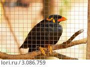 Купить «Черная певчая птица в клетке», фото № 3086759, снято 19 ноября 2018 г. (c) Виктор Савушкин / Фотобанк Лори
