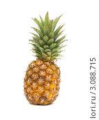Купить «Большой спелый ананас на белом фоне», фото № 3088715, снято 26 декабря 2011 г. (c) Ласточкин Евгений / Фотобанк Лори