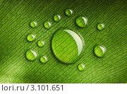 Купить «Мелкие капли воды вокруг большой капли на зеленом листе», фото № 3101651, снято 15 апреля 2010 г. (c) Николай Охитин / Фотобанк Лори