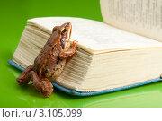 Купить «Лягушка на толстой книге на зеленом фоне», фото № 3105099, снято 26 июня 2011 г. (c) Сергей Новиков / Фотобанк Лори