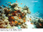 Купить «Коралловый риф и его обитатели», фото № 3105131, снято 9 июля 2011 г. (c) Сергей Новиков / Фотобанк Лори