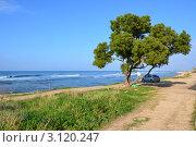 Пейзаж (2012 год). Редакционное фото, фотограф Любовь Лапухина / Фотобанк Лори