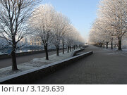 Зимний сквер. Калининград (2011 год). Стоковое фото, фотограф Svet / Фотобанк Лори
