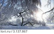 Купить «Зима на Кумысной поляне», фото № 3137867, снято 9 января 2012 г. (c) Антон Стариков / Фотобанк Лори