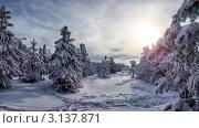 Купить «Зимний сосновый лес», фото № 3137871, снято 9 января 2012 г. (c) Антон Стариков / Фотобанк Лори